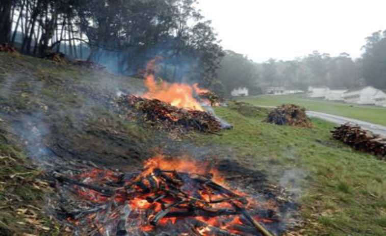 Pile Burning
